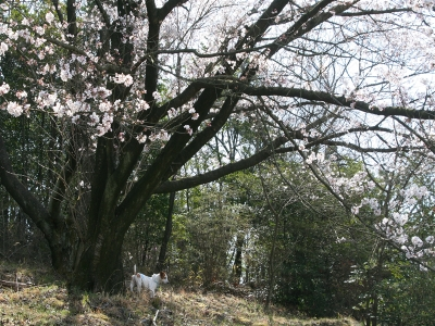 200846_007_r