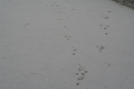 2011130_002_r