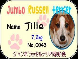 Jumbo_russrll_trrrier_r_1